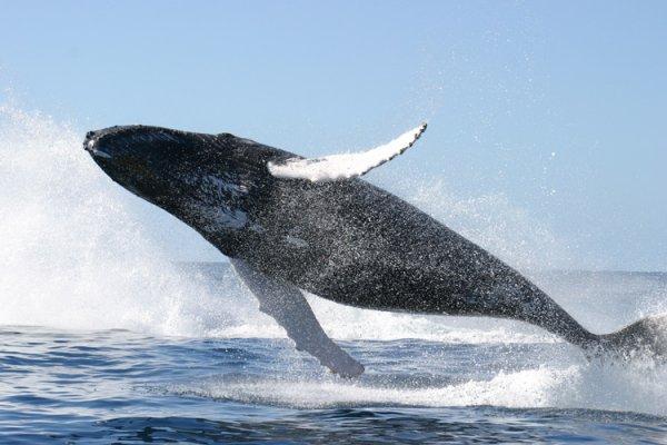 2011 май 21 голубой кит 15 04 голубой кит