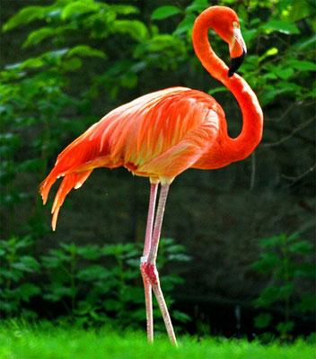 Фото животных фотографии животных